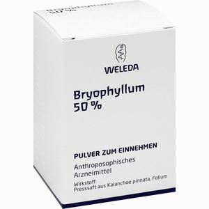 Abbildung von Bryophyllum 50% Pulver 50 g